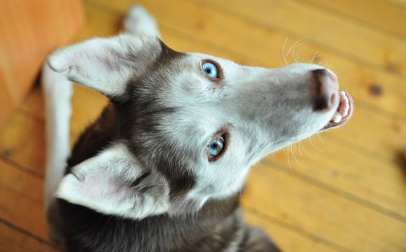 Pets in apartments - Strata Title Law