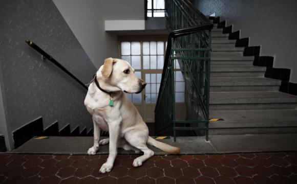 Strata Title Lawyers - Pets in Apartments